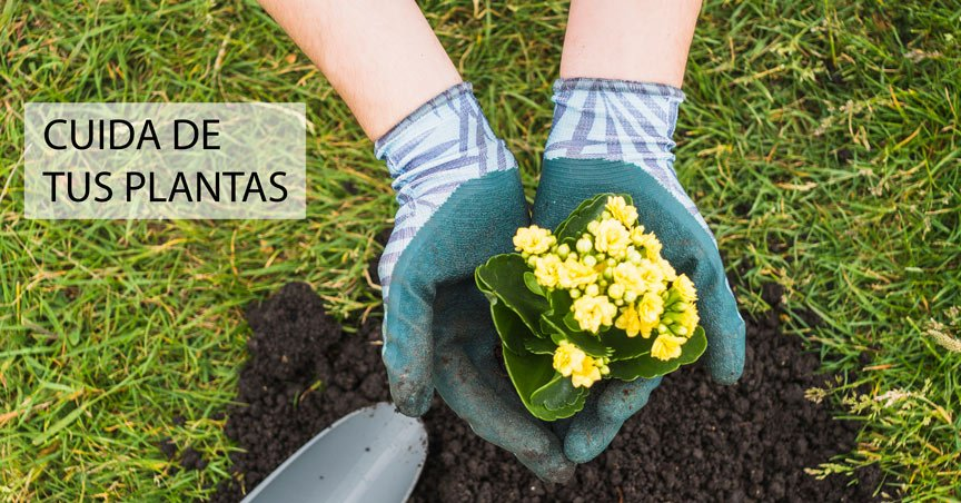 Residuos de café molido para fertilizar tu jardin